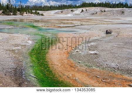 Norris Geyser Basin At Yellowstone National Park, Wyoming,  Usa