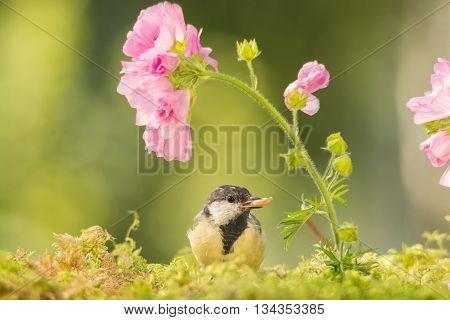 titmouse is standing between flowers in sun light