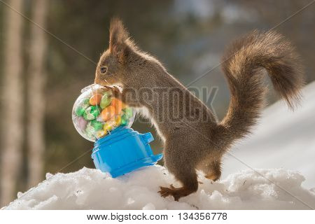 red squirrels with candy gumball vending machine and eggs