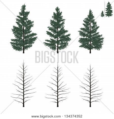 Set of yong firs trees in flat colors