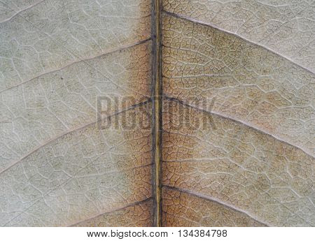 Macro picture of the decayed leaf texture