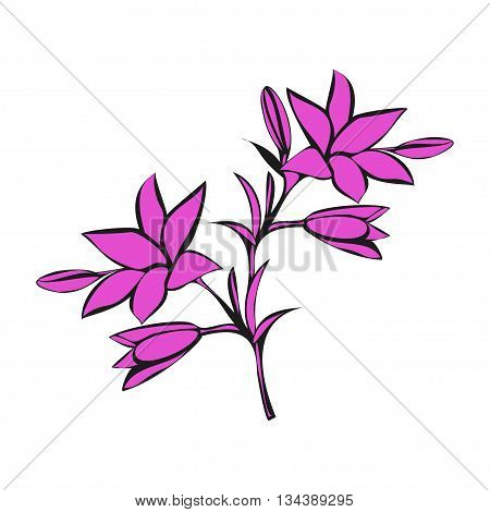Pink Lily on white background. Vector illustration.