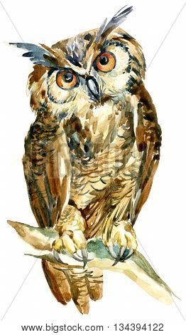 watercolor owl on a branch isolated on white background. Cute long eared owl staring with orange eyes. Watercolor wise bird. Hand painted art illustration