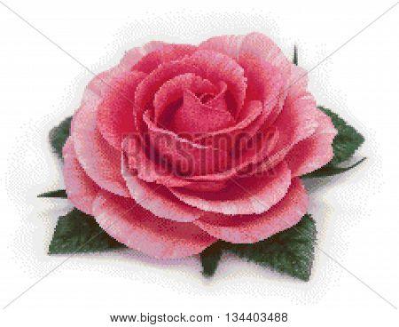 Flower rose. Equipment bitmap on a white background. vector illustration.
