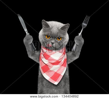 cat wants to eat and hold knife and fork - isolated on black