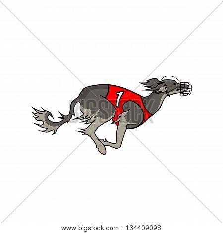 Vector image of running dog saluki breed, in dog racing or coursing dress number one