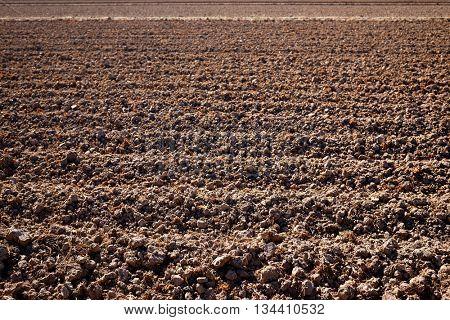 Albufera rice fields dried field in Valencia Spain