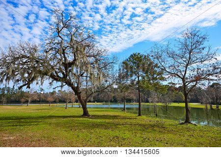 Tomball Burroughs park in Houston Texas with mossy oaks