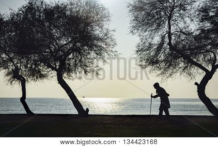 Old woman who walks on the beach with walking stick between old trees