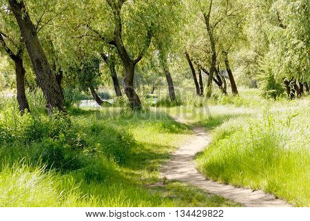 A trail in the park under the willow trees close to the lake during a summer morning