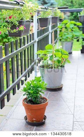 Beautiful decorative house terrace with green flowers and plants in pots. Plants are in hanging pots and also in pots on the ground.