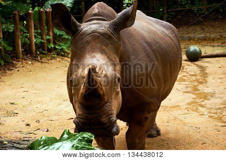 rhinoceros standing inside the safari zoo daytime