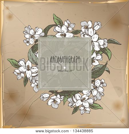 Vintage center frame with Jasminum officinale aka common jasmine color sketch placed on old paper background. Aromatherapy series. Great for traditional medicine, perfume design, cooking or gardening.