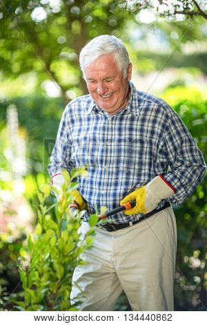 Happy senior man cutting plants with pruning shears in garden