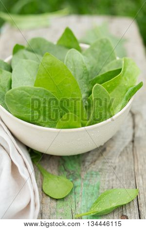 Fresh spinach leaves on wooden table, in the garden. Spinach leaves closeup. Spinach - Healthy food. Food background. Shallow depth of field