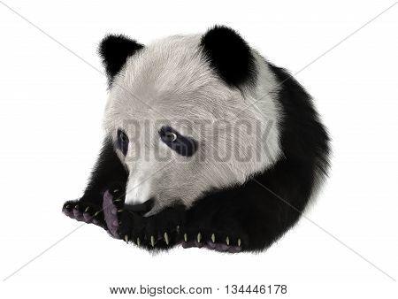 3D Rendering Panda Bear Cub