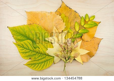 A Bouquet Of Yellow, Green Autumn Leaves On Wooden Surface