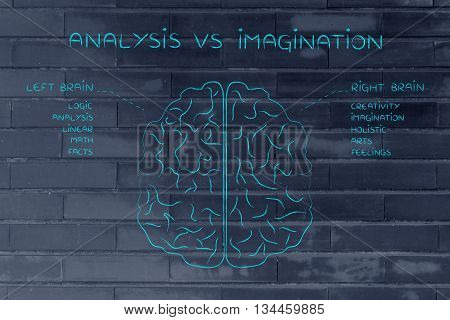 Left And Right Brain With Function Descriptions, Analysis Vs Imagination