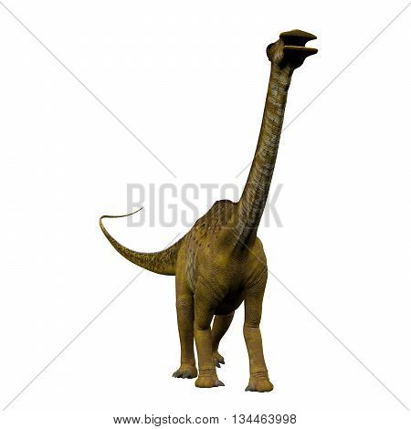 Nigersaurus on White 3D Illustration - Nigersaurus was a sauropod herbivorous dinosaur that lived in the Republic of Niger Africa during the Cretaceous Period.