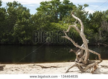 Unique driftwood rest on the white sand beach by an estuary
