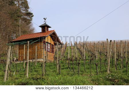 Vineyard And Small Hut In Baden-wurttemberg, Germany