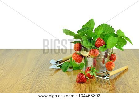 Delicious strawberries in a bucket and garden tools. Gardening. Hobby. Agriculture. Own harvest. Summer. Vitamins. strawberries with leaves in basket on wooden table / Isolated on white background without shadows /. Hobbies for the soul.