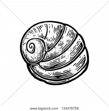 Sea shell nautilus. Black engraving vintage illustration. Isolated on white background.