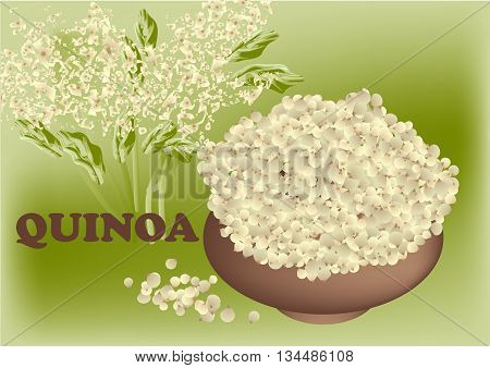quinoa plant and seed in brown bowl