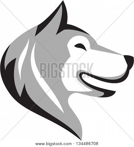 Illustration of a husky alaskan malamute wild dog wolf head profile viewed from the side set on isolated white background done in retro style.