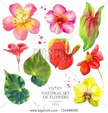 Watercolor collection of orchid, dahlia, anthurium, orchid and lily. Handmade painting on a white background.