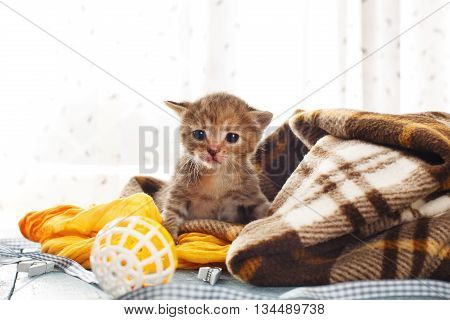 Grey striped newborn kitten in a plaid blanket. Sweet adorable tiny kittens on a serenity blue wood background play with cat toy and ribbon. Small cat. Funny kitten crawling and meowing