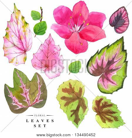Watercolor collection of green and pink begonia leaves. Handmade painting on a white background. Cloud forest plants.