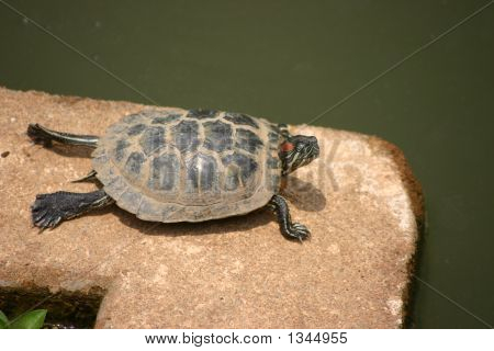 a turtle relaxing near a pond