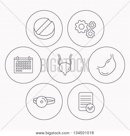 Medical mirror, tablet and stomach organ icons. Urinary bladder linear sign. Check file, calendar and cogwheel icons. Vector