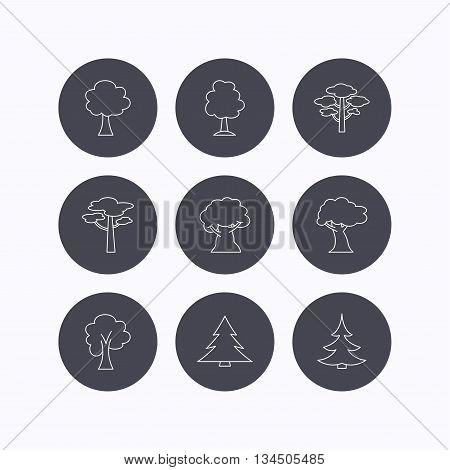 Pine tree, maple and oak icons. Christmas trees linear signs. Forest trees flat line icons. Flat icons in circle buttons on white background. Vector