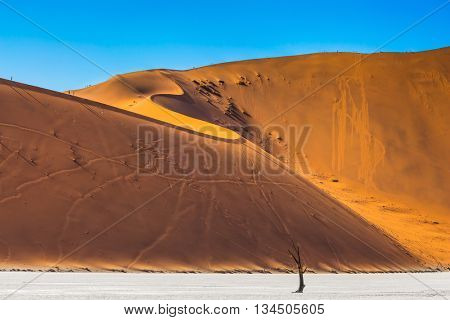 Namib-Naukluft National Park. Orange-gold sand dunes around the dried up lake. On the crest of the dunes are tourists. Travel to Namibia