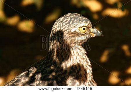 Bird In Camouflage