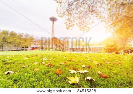 green grassland with yellow fallen leaves near seattle space needle