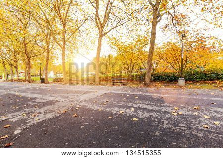 empty road and beautiful trees with yellow leaves with sunbeam