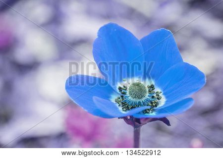 Closeup beautiful blue flower on blurred background in art tone