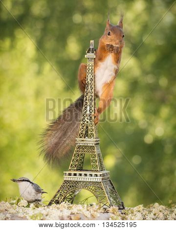 red squirrel in eiffel tower with nuthatch beneath