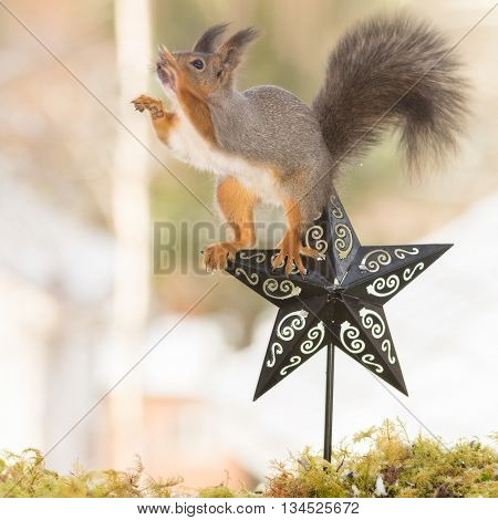 red squirrels standing on a star with a pose like a composer with blurry movements