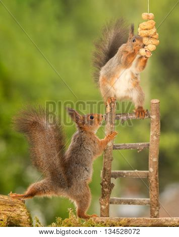 red squirrel standing on stairs with peanuts and a squirrel beneath