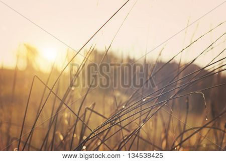 Sunrise with pleasant sun and dewy grass