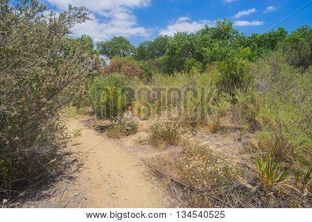 Trail Through Desert Brush