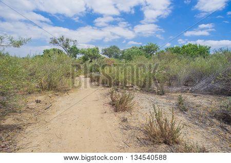 Mojave Desert Walking Trail