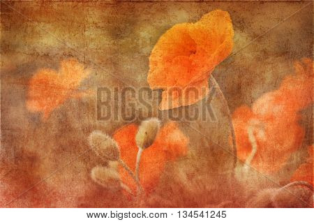 vintage poppies decoration pasted on a grunge background
