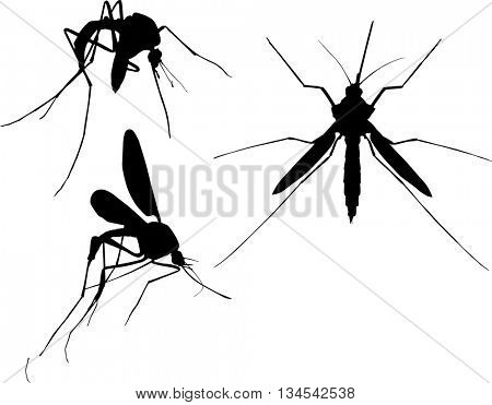 illustration with three mosquito silhouettes isolated on white background