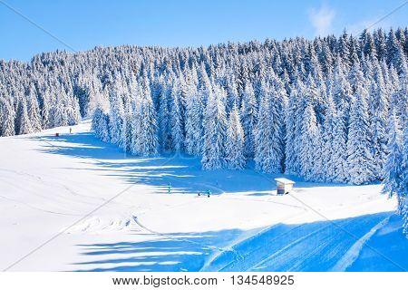 Vibrant panorama of the at ski resort snow, pine tree,  blue sky