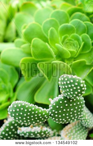 cactus and succulent plant